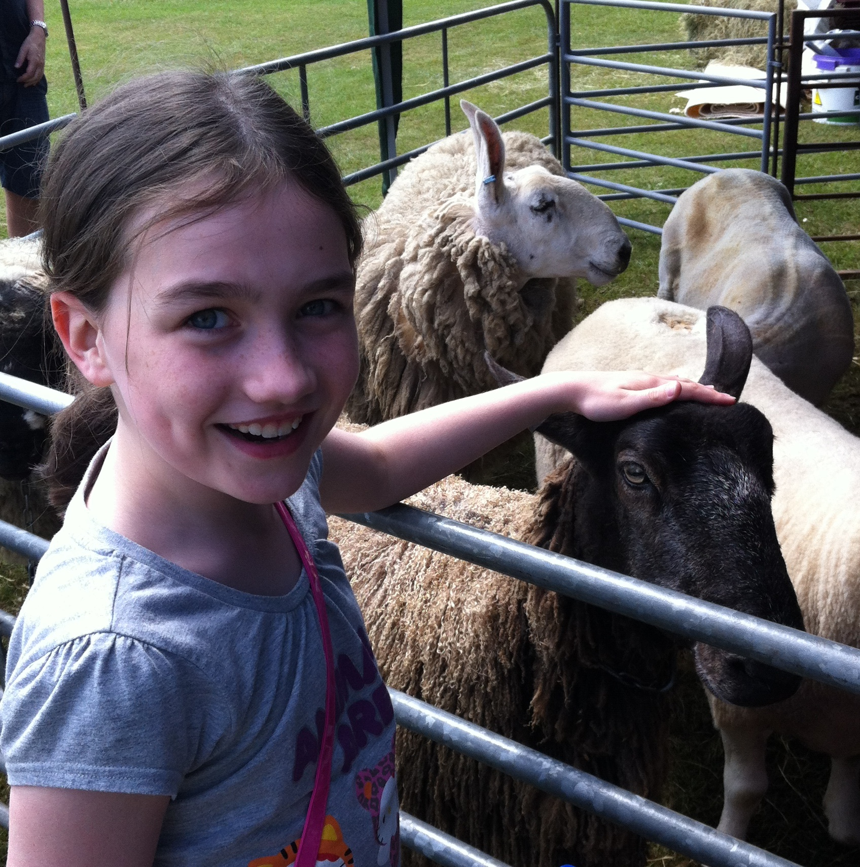 Katie petting sheep